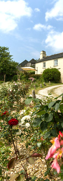 Our beautiful rose garden