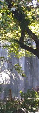 Why not take a stroll through our fantastic Woodland Walk?