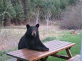 Sitting Bear.jpg