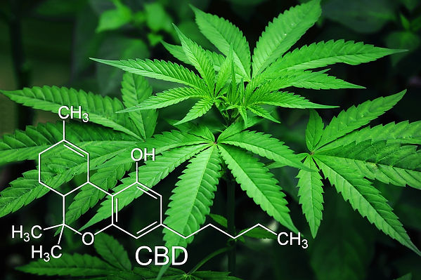 Pixabay marijuana-3678222_1280.jpg