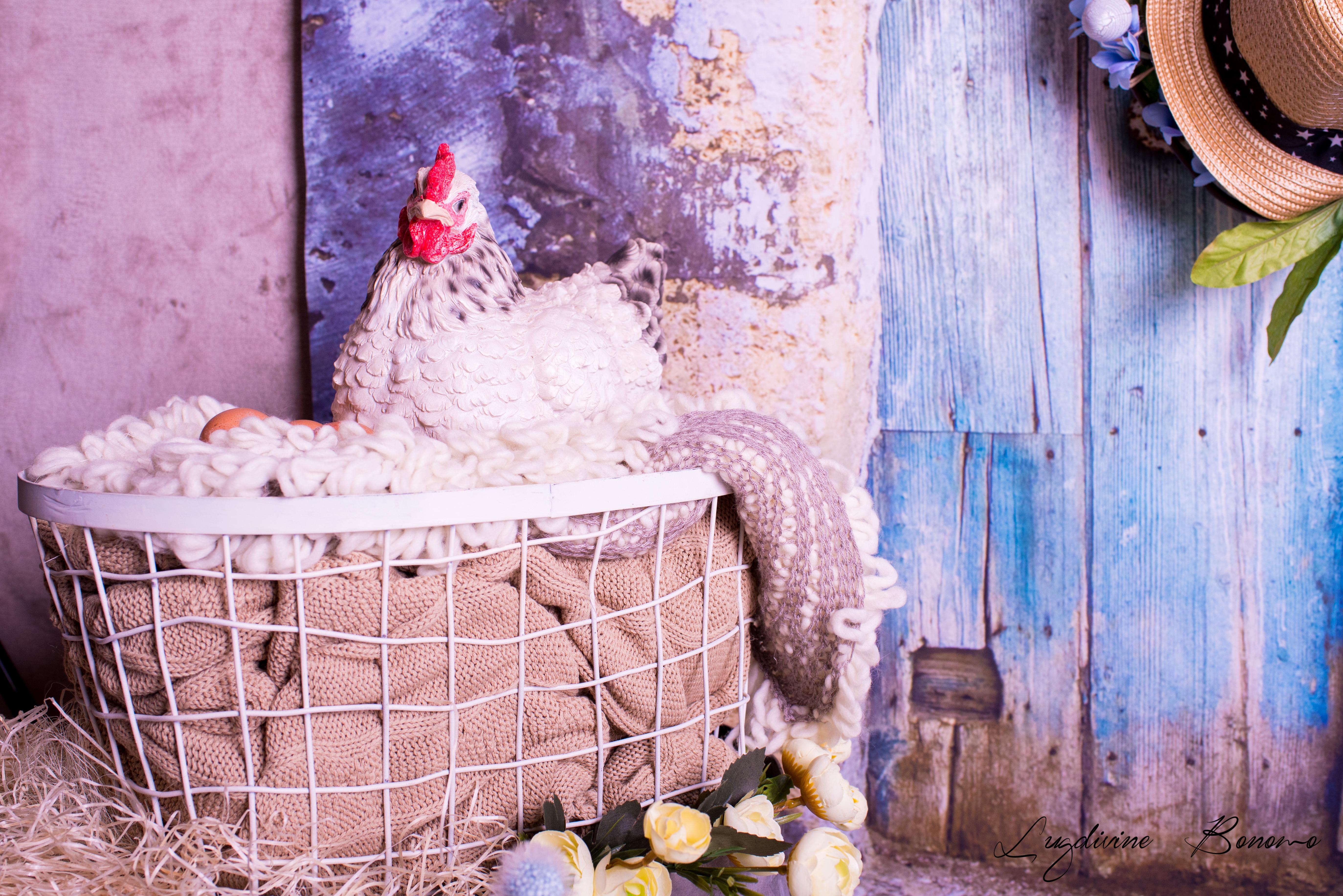 photo printemps aix en provence