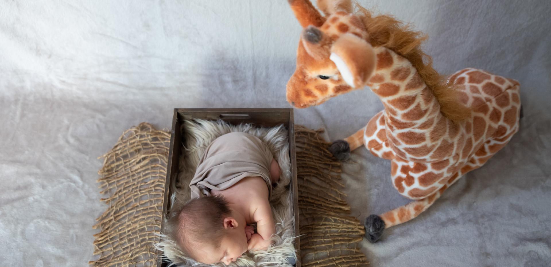 Photographe bébé naissance salon en provence