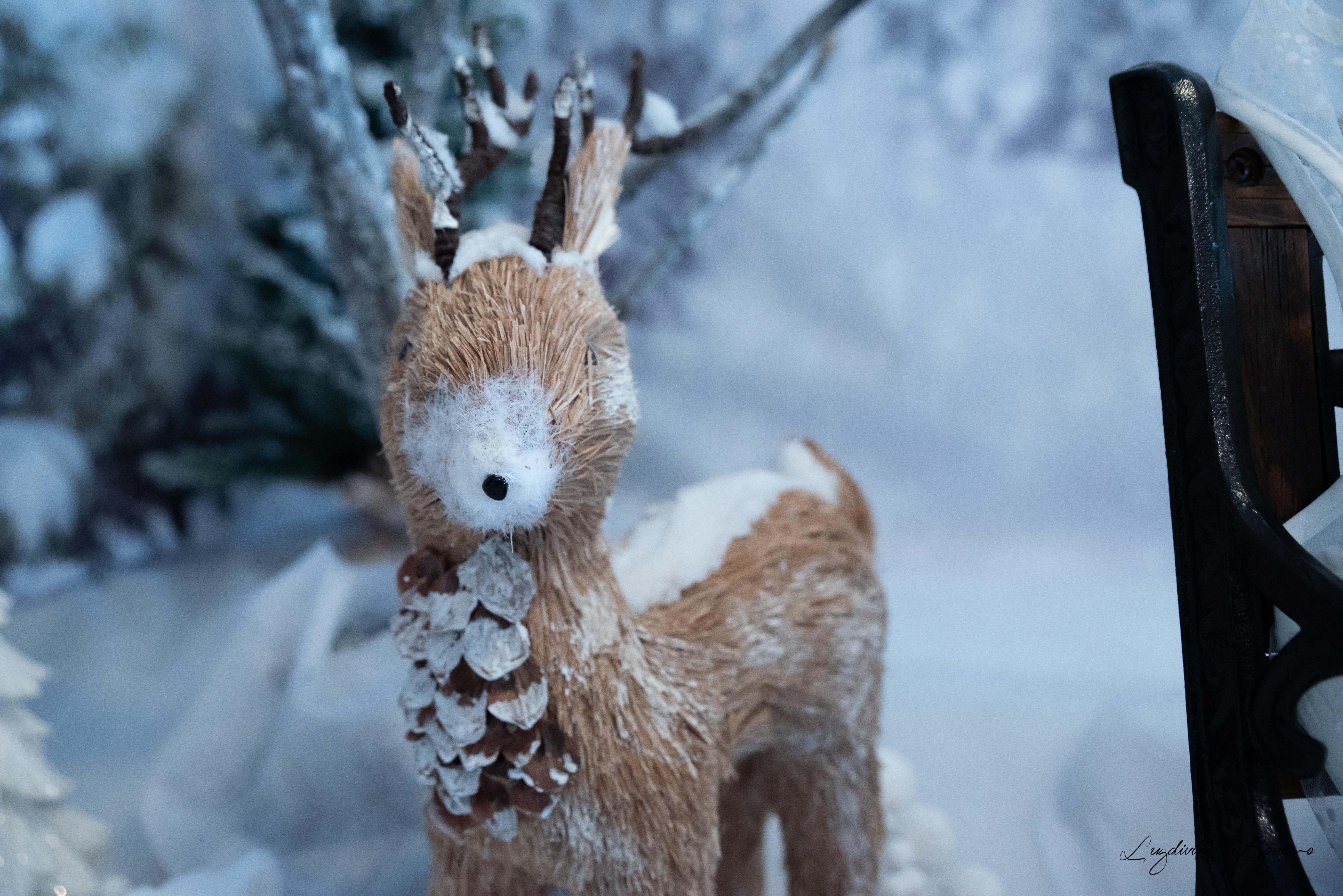 séance photo enfant noël neige 2019