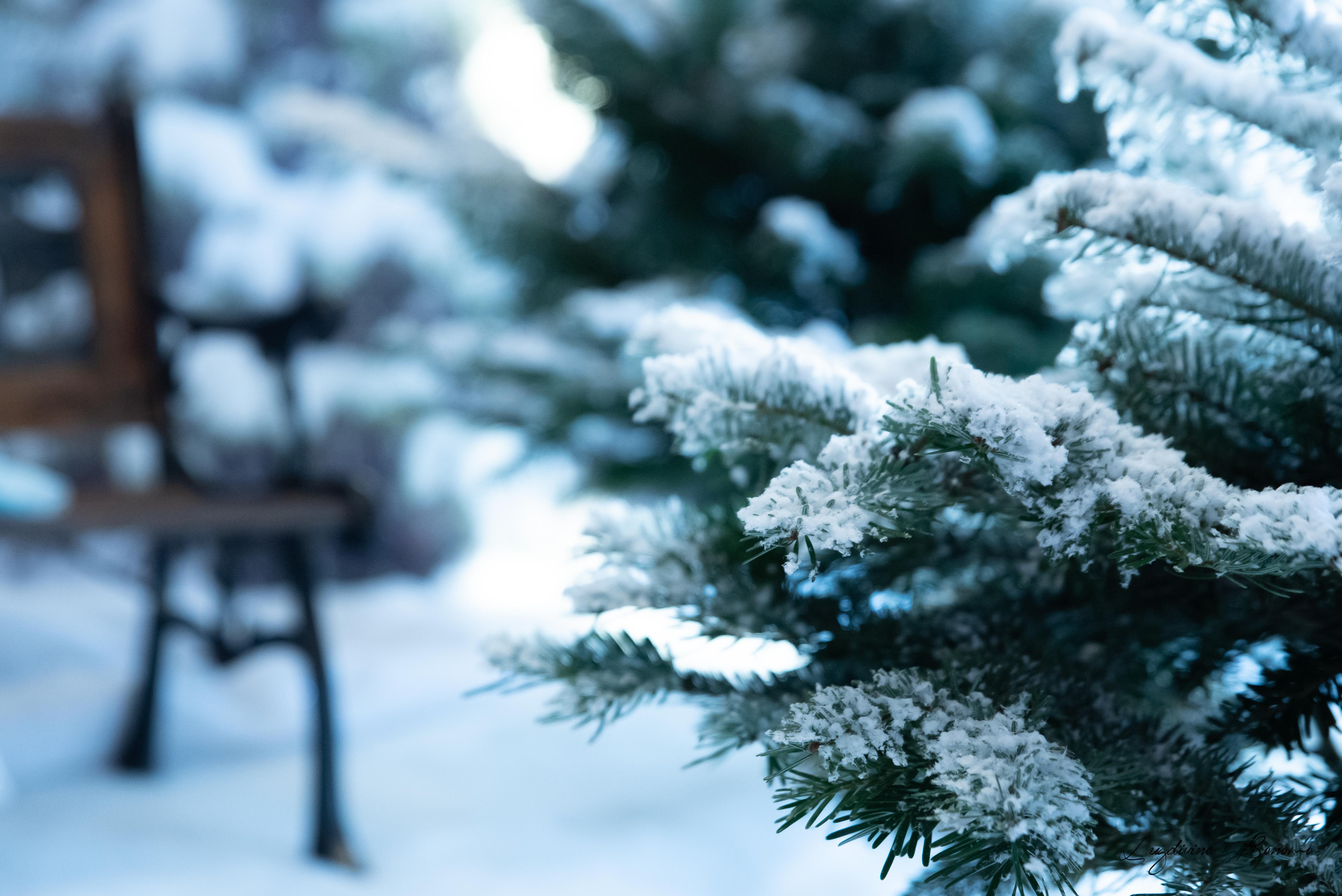 séance photo noël neige 2019