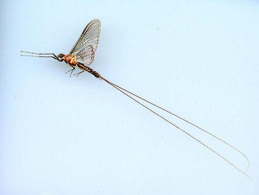 How Do You Memorialize the Dead?