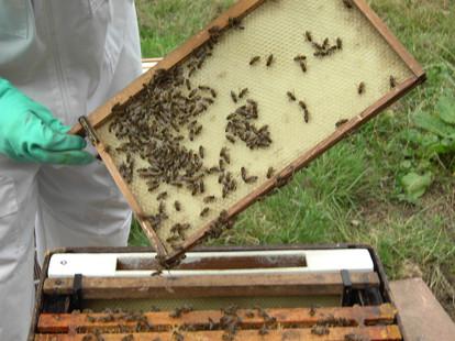Bee handling