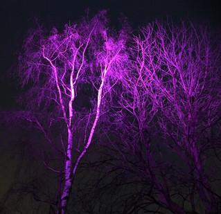 Mere lys over Remiseparken
