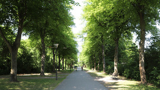 Træer og tryghed i Remiseparken