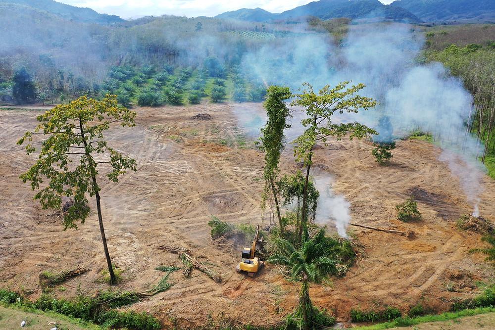 Für den Sojaanbau wird der Regenwald abgeholzt.