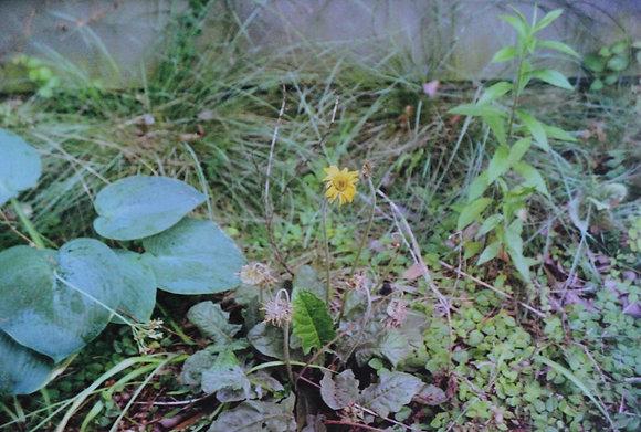 Virginia Garden II