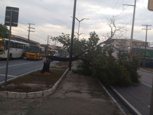 Defesa Civil registra tombamento de árvores, destelhamentos e desabamento após chuva em Manaus