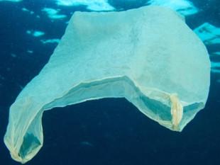 Entenda como microplástico presente em 'quase tudo' está matando os oceanos