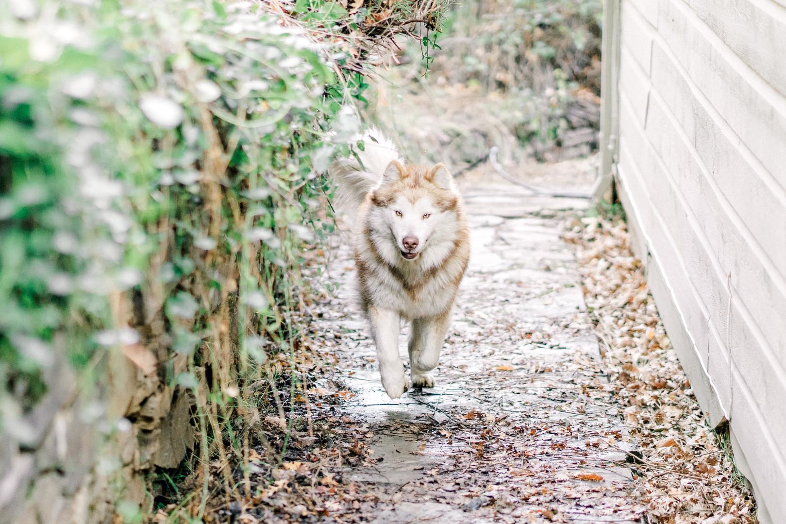 Tiffany Acorn Photography dog
