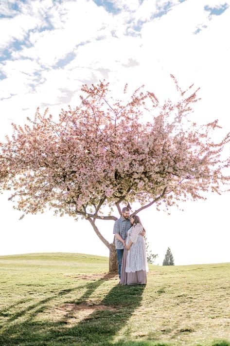 sonora spring maternity photographer