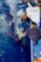 Blue Marlin fishing in Vanuatu