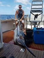 500lb Blue marlin caught on Nambas Fishing Charters Vanuatu