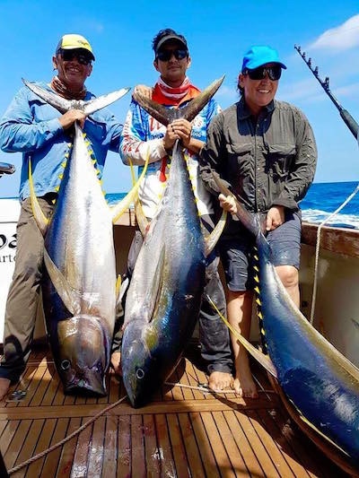 Triple of Yellowfin Tuna