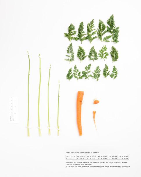 Herbarium Carrot