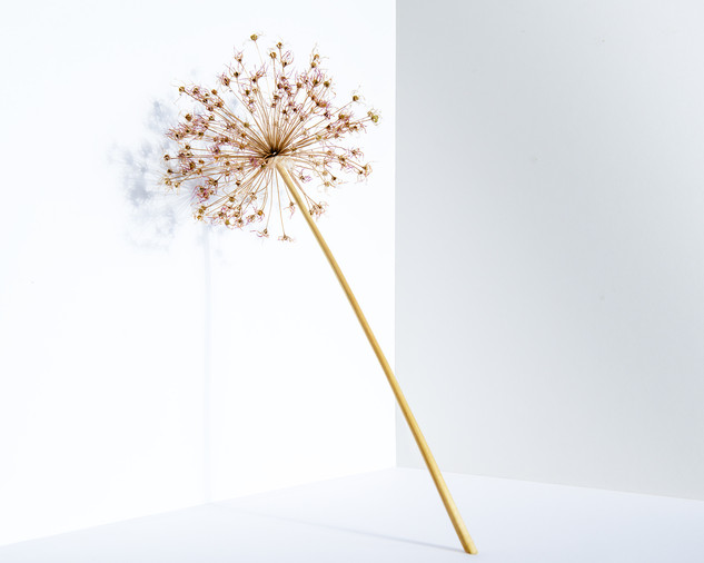 Fleurs oni