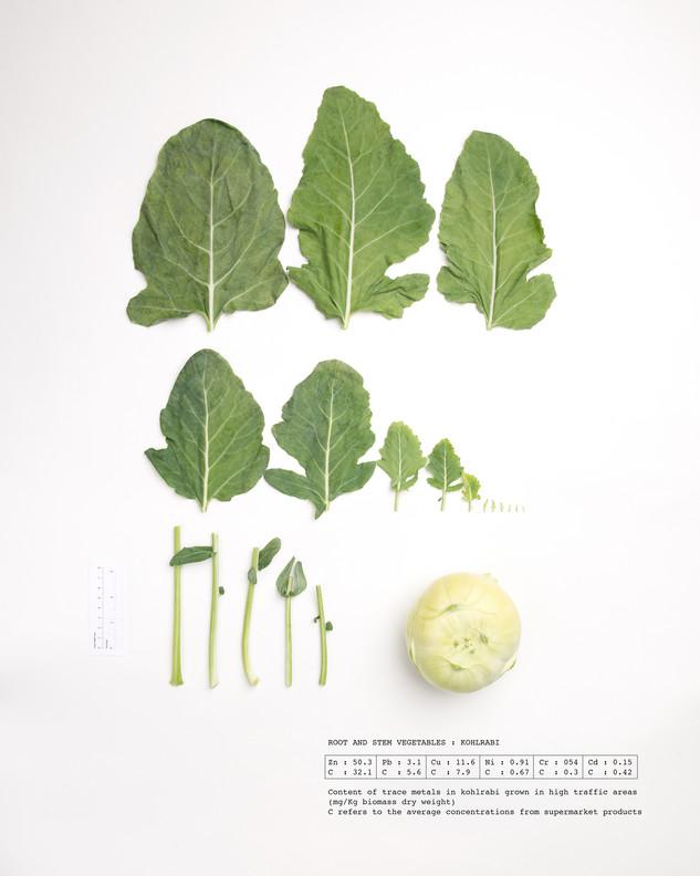 Herbarium Kohlrabi