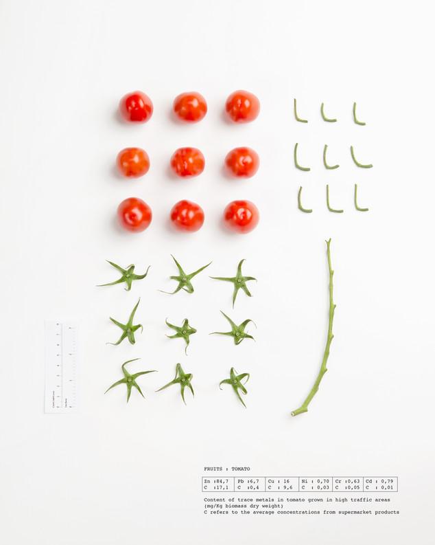 Herbarium Tomato