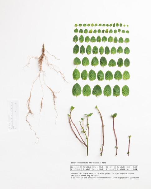 Herbarium Mint