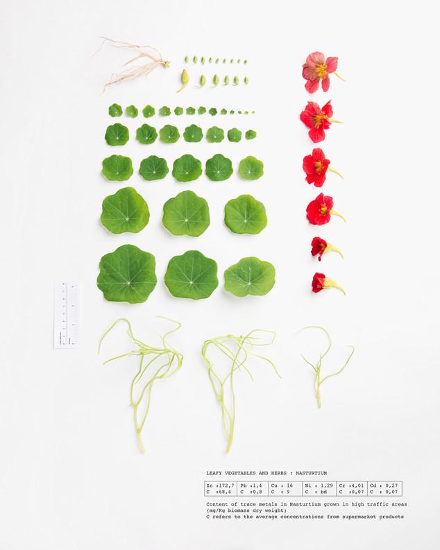 Herbarium Nasturtium
