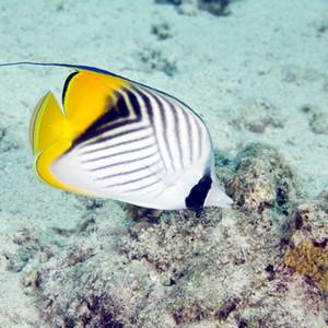 דינו של דג כשר ללא סימני כשרות