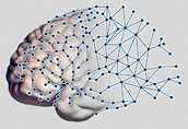 brain wired logo.PNG