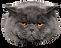 gato-obeso_edited.png
