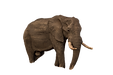 Elephant%20in%20Wild_edited.png