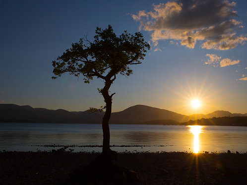 Lone Tree Milarrochy Bay at Sunset Print
