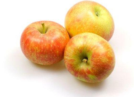 "Apfel ""Holsteiner Cox"""