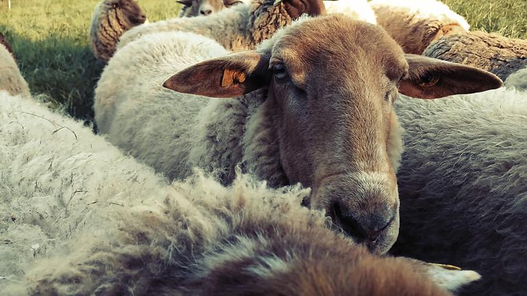 Vom Schaf zum Garn - Teil 3