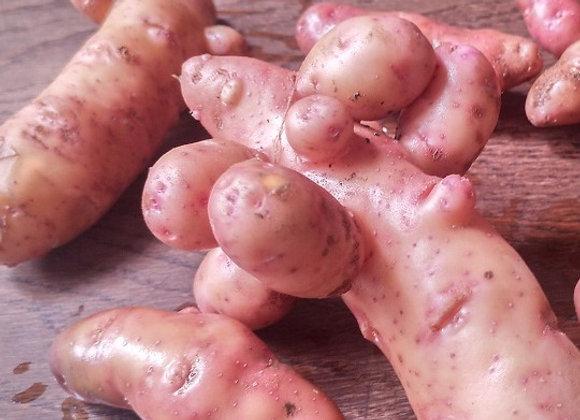 """Kartoffel """"Erdgeist"""""""