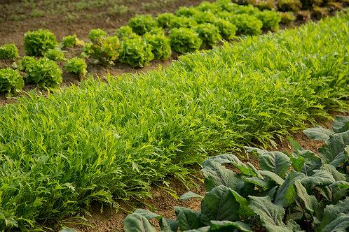 04 UW/H Gemüsenetz - groß & Spende