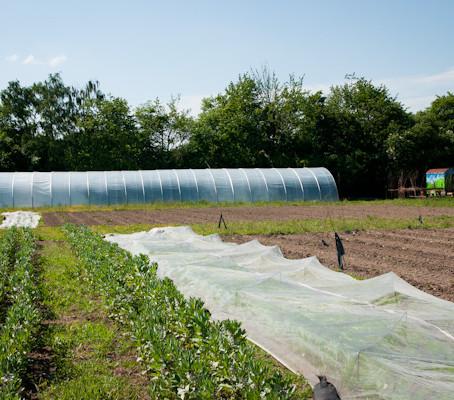 Urban Farming  - es ist geschafft ....