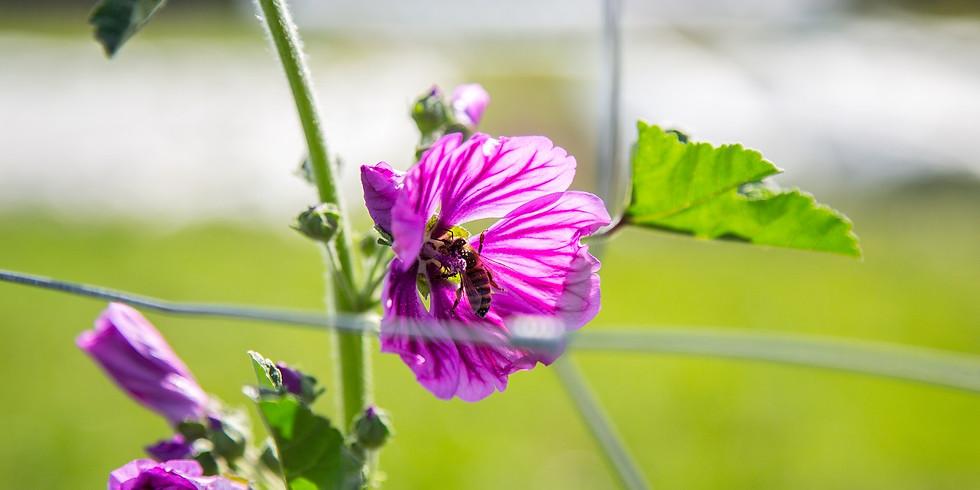 Artenschutz konkret - 10 Biotope in Verbindung mit einer biodynamischen Agrarkultur