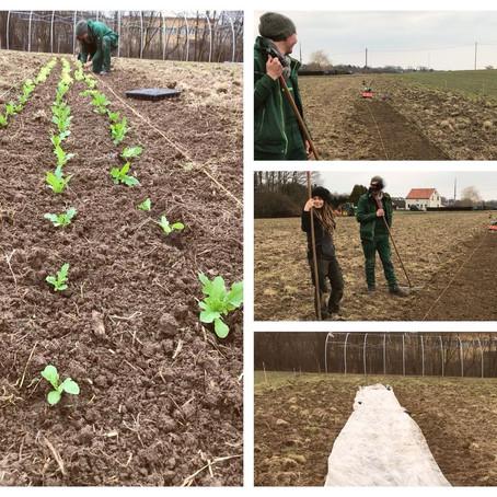 Erste Pflanzung_2018