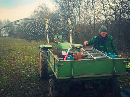 Urban Farming - Zwischenstand Folientunnel Bildungsacker