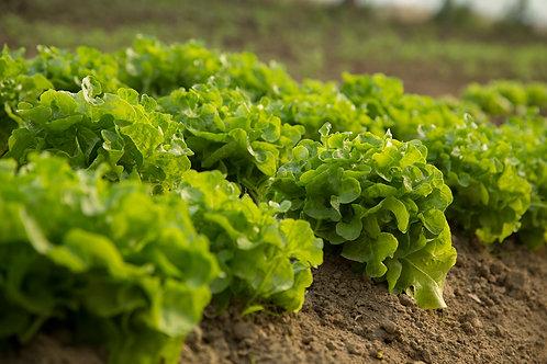 D UW/H Gemüsenetz - groß & Spende (Abo)