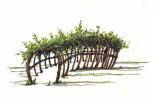 DIY - Weidenruten für das Stecken eines Tunnels (Preis pro lfm)