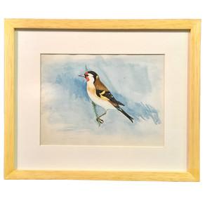 Suluboya kuş resimlerine çerçeve