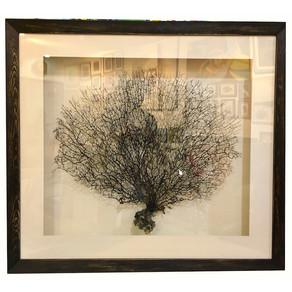 Mercan ağacına çerçeve