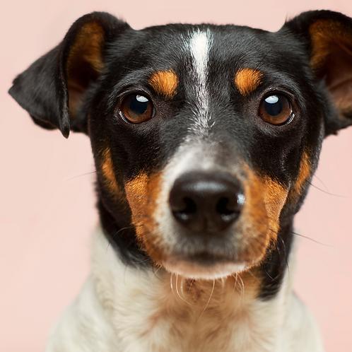 Full Follow-Up Animal Communication