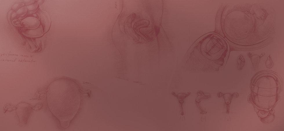 Uterustexturebackground.jpg
