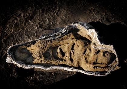 Dr. Anne Schulp, PhD.  Fossil of a TRex