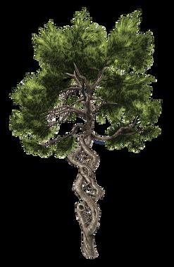 TreeDNA.png