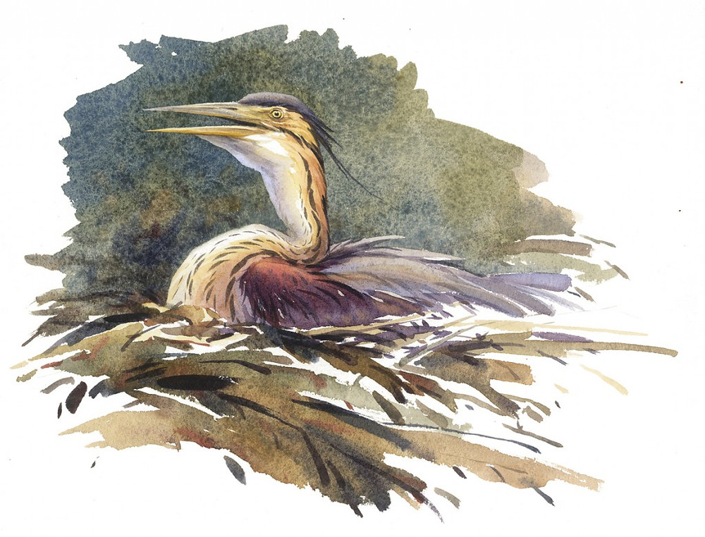 Erik van Ommen, Bird painter
