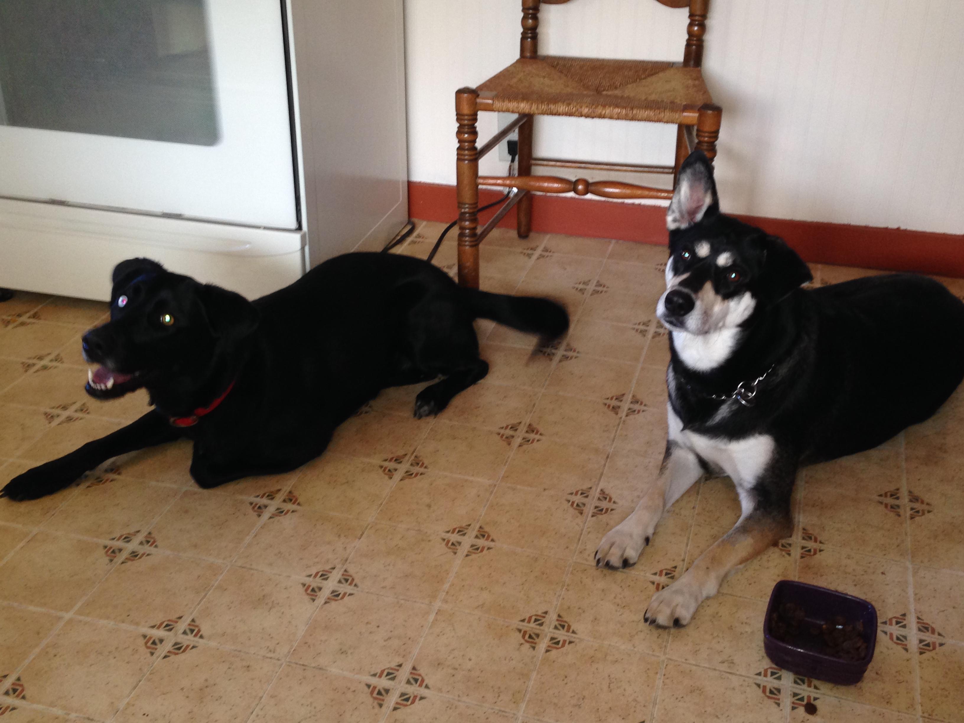 Melia & Apollo